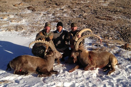 Hunting to ibex in Kyrgyzstan