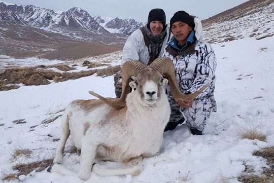 Hunt to Marco Polo sheep