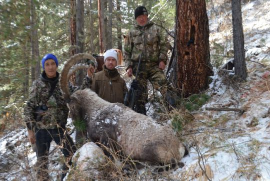 Hunting to ibex in Russia
