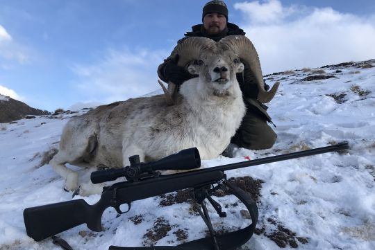Hunting to Marco Polo sheep