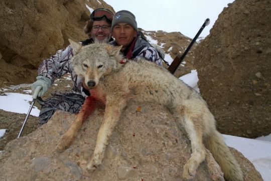 Hunting to wolf in Kyrgyzstan