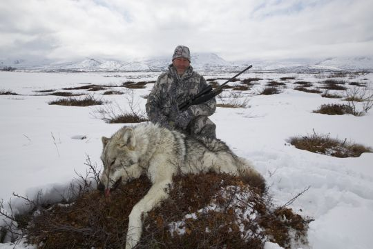 Hunting to wolf in Russia
